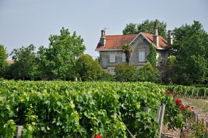 House and Vineyard