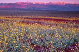 01-death-valley-super-bloom